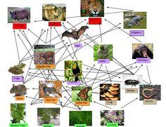 biodiversity tropical forest - Pesquisa Google