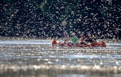 """Tiszavirágzás. Long-tailed mayflies (Palingenia longicauda) fly over surface of the Tisza river near Tiszainoka, 135km (84miles) southest of Budapest, on June 20, 2012. Millions of these short-lived mayflies engage in a frantic rush to mate and eproduce before they perish in just a few hours during """"Tiszavirágzás"""" or Tisza blooming season from late spring to early summer every year.(Reuters/László Balogh)"""