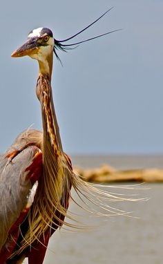 Proud...to be a blue heron  ...everyday life by Vita