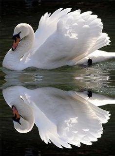Cecilia Field in Swan Form
