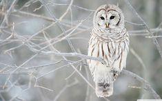 winter animal