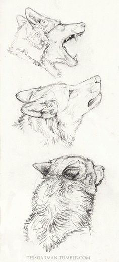 Need some drawing inspiration? Well you've come to the right place! Here's a list of 40 free and easy animal sketch drawing ideas and inspiration. Why not check out this Art Drawing Set Artist Sketch Kit, perfect for practising your art skills. Cool Drawings, Drawing Sketches, Drawing Ideas, Sketch Ideas, Drawing Tips, Anime Drawing Tutorials, Tumblr Art Drawings, Random Drawings, Drawing Pictures