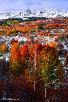 Fall in Dallas Divide, Colorado