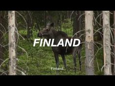 If you've heard of Finland, you know the things we like to brag about. Like the number of our lakes, the quality of our schools, or having the highest number...
