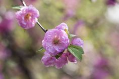 Almond blossoms by Uta Naumann on 500px