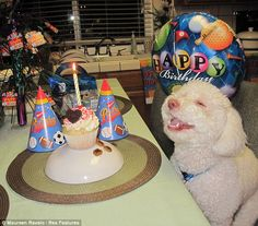 If there is anything cuter than a dog smiling at his birthday party, please let me know.