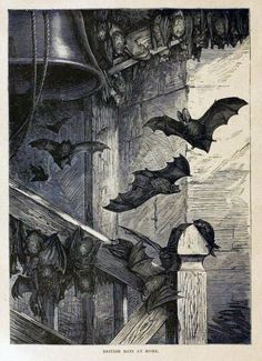 The Occasional Bat