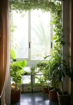 Apartment Garden Inspiration #garden #plants #apartmentgardening