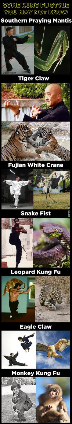 The 7 Kung Fu styles which inspired by animals