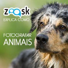Este artigo ajuda-o a fotografar animais sem erros. São seis dicas essenciais para quem quer fotografar animais de forma profissional, com óptimos resultados.