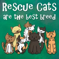 Only had rescue cats or strays that just arrive!