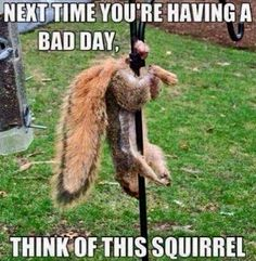 Get your laugh on to Super Funny Squirrel Memes! Funny Animal Pictures, Funny Images, Funny Photos, Funny Animals, Squirrel Pictures, Happy Animals, Animal Pics, Funny As Hell, Haha Funny