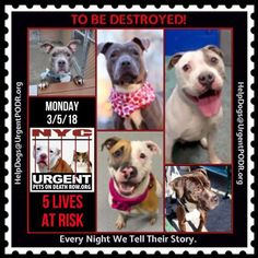 TO BE DESTROYED 03/05/18 - - Info    https://www.facebook.com/ACC.OfficialAtRiskAnimals/  https://newhope.shelterbuddy.com/Animal/List  To rescue a Death Row Dog, Please read this:http://information.urgentpodr.org/adoption-info-and-list-of-rescues/ List of NH...-  Click for info & Current Status: http://nycdogs.urgentpodr.org/to-be-destroyed-4915/