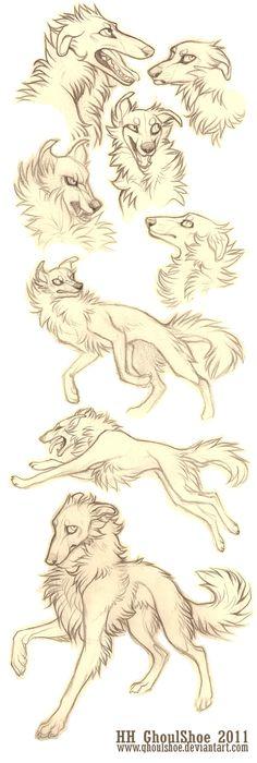 Borzoi sketches by GhoulShoe.deviantart.com on @deviantART