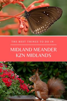 Things to do in the Midlands KZN Midlands Kwazulu Natal Midland Meander, Stuff To Do, Things To Do, Kwazulu Natal, Animals, Things To Make, Animaux, Animal, Animales