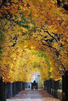 Autumn in Schönbrunn,Vienna, Austria - Wien