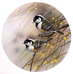 VK is the largest European social network with more than 100 million active users. Wood Painting Art, China Painting, Painting & Drawing, Images D'art, Vintage Bird Illustration, Bird Pictures, Vintage Birds, Colorful Birds, Wildlife Art