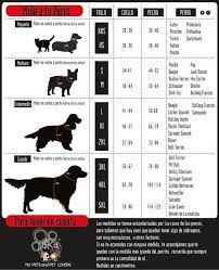 Image result for como tomar medidas de ropa para perros