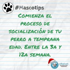 #Mascotips Comienza el proceso de socialización... - Hospital Veterinario Oftalvet