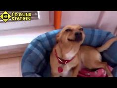 Best Funny Animal Videos Compilation 2015 NEW HD - http://dailyfunnypets.com/videos/dogs/best-funny-animal-videos-compilation-2015-new-hd/ - Best Funny Animal Videos Compilation 2015 NEW HD. - (animal), (film), (musical), animals, best, cat, cats, character), dog, dogs, friend, funny, genre), group), media, moments, pe, pets