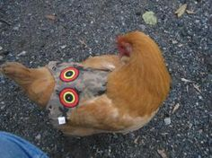 Hen Saver chicken aprons - protection from chicken hawks - Keeps the roos from ripping up their feathers during mating too