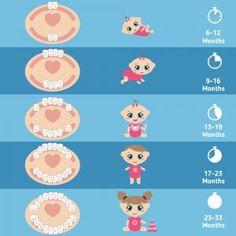 Best way to put baby to sleep, baby sleep training, baby sleep tips, how to put baby to sleep, newborn sleep training Baby Teething Chart, Baby Teething Remedies, Baby Teething Schedule, Baby Schlafplan, Tooth Chart, Baby Sleep Schedule, Budget Planer, Baby Hacks, Baby Tips