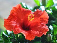 Resultado de imagen para fiesta de flores medellin 2012