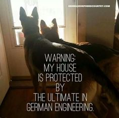 See more HERE: https://www.sunfrog.com/Pets/LOVE-German-Shepherd-Dog-Black-Guys.html?53507  The German Shepherd                                                       …                                                                                                                                                                                 More