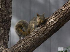 Squirrel by DANC-Photo-Art-Music on @DeviantArt