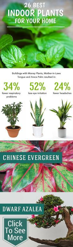 Best Indoor Plants to Help Purify Your Air (flowering house plants houseplant)