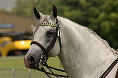 ARAB HORSE SHOW ARDINGLY JUNE 2007 https://www.flickr.com/photos/pg23/557680820