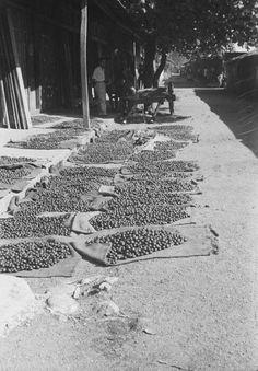 Het drogen van muskaatnoten, Sangihe- en Talaud-eilanden December 1948