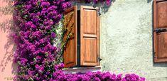 Piante rampicanti: 8 idee per giardino e balcone - LEITV