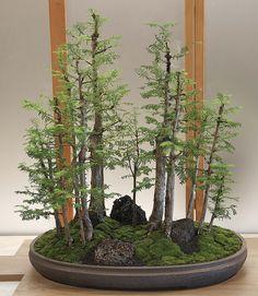 metasequoia.jpg (1500×1725)