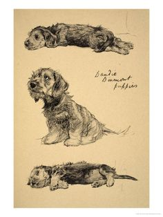 "Cecil Aldin ""Dandie"" Most people do not know the Dandie Dinmot(sp?) But they are cute."