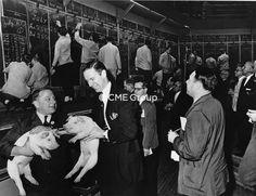 Trading Floor- Hogs