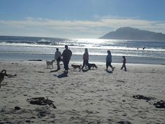 Kommetjie beach Beaches, Cape, Mountains, Mom, Nature, Travel, Outdoor, Mantle, Outdoors