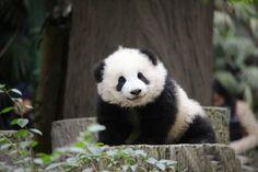 Our cuteness Qi Yi