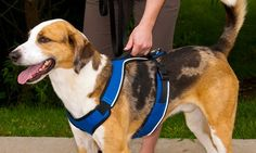 Comfortable, padded pet harness with elasticized neckline works to prevent pulling and encourages dogs to walk politely