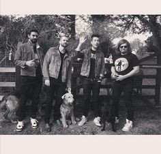 The boys from bastille + four legged canines = cuteness