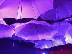 Purple Umbrellas