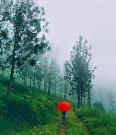 Pop of Color by musheermpm Relaxing Rain Sounds, Rain Sounds For Sleeping, Cool Pictures For Wallpaper, Cool Photos, Amazing Pictures, Amazing Photography, Nature Photography, Village Photography, Photography Ideas