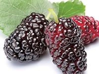 Mulberry ...Delight in the juciness of delicious, just-picked berries-ripe, plum and perfect! www.partylite.biz/ambercory #candles #partylite #tealights #votives #scentplusmelts #escentialjar #smartscents  #3wickjar #naureslight