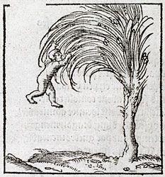 Boy hanging on to a tree. Obdurandum adversus urgentia. in Alciato, Andrea: Livret des emblemes (1536)