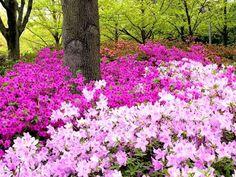 Crie Jardim: Como fazer canteiros de flores no jardim