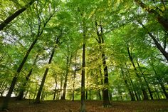 Trees equipped with health benefits offer life-saving gardening opportunities for anyone looking to live cohesively from the land the Earth so unconditionally lends us. Forest Service, Air Pollution, Environmental Science, Save Life, Natural Wonders, Country Life, Wall Murals