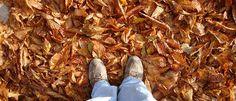 InfoNavWeb                       Informação, Notícias,Videos, Diversão, Games e Tecnologia.  : Outono começa na próxima segunda-feira