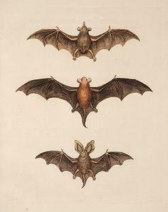 Free Halloween Clip Art - Flying Bats - The Graphics Fairy