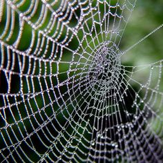 Digital Photography School has some great content like this article on how to shoot a spider's web. Photo by Josef Stuefer