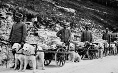 "The Kuvasz was the ""poor man's horse"" for a time in Hungary Hungarian Dog, German Shepherd Photos, Man On Horse, Mastiff Dogs, War Dogs, Dog Car, Doggy Stuff, Working Dogs, Dog Photos"